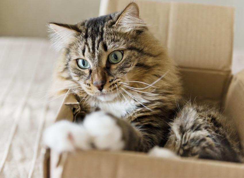 Trasloco gatto : Come traslocare in modo sereno col suo gatto?