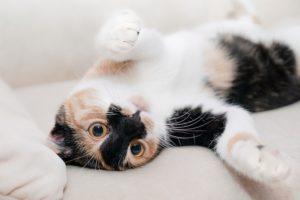 come educare un gatto : 6 errori da non fare
