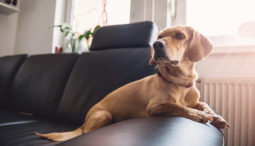 Come tenere un cane in appartamento : pericoli domestici per il cane