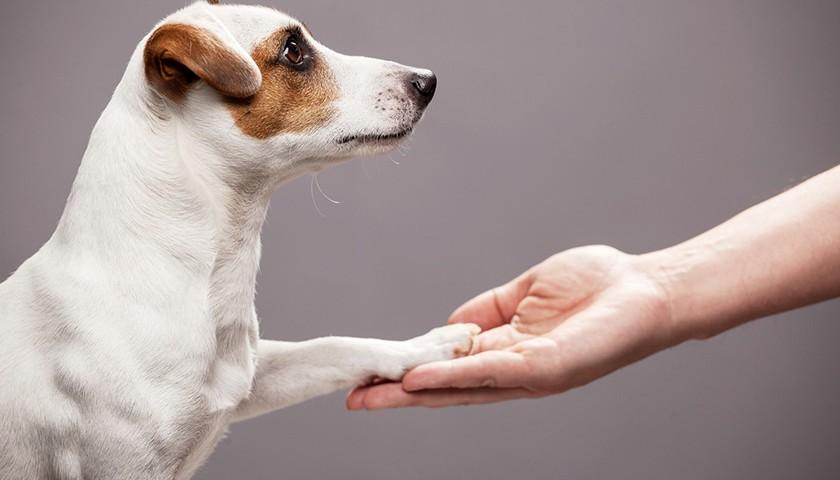 Come educare un cucciolo : 3 lezioni essenziali !