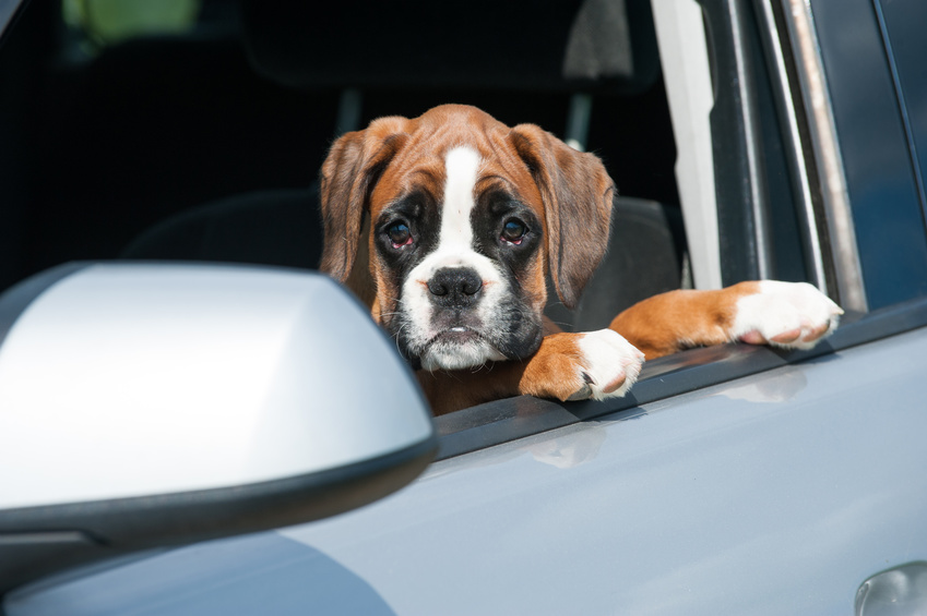 Come trasportare il cane in auto quando ha paura?