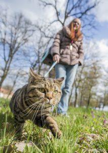 Gatto al guinzaglio : Portare a spasso il gatto al guinzaglio