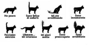 Linguaggio gatti : capire la coda del gatto