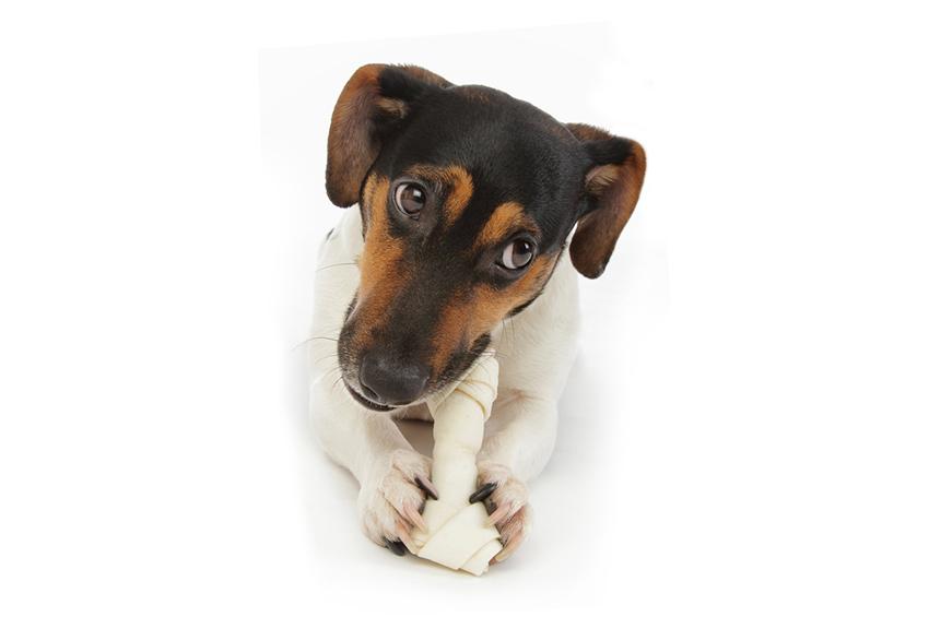 Ossa al cane : perché è importante?