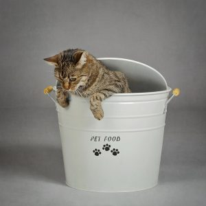 Mangiare per gatti : Come nutrire un gatto e schegliere le migliori crocchette