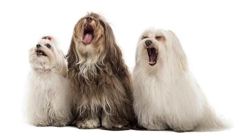 Abbaio cane : Come non far abbaiare il cane?