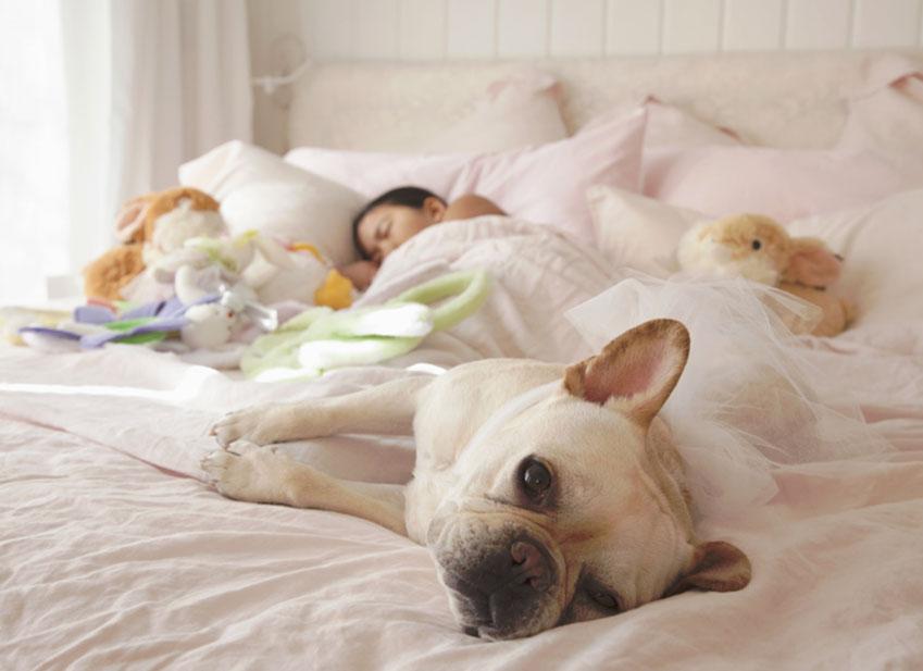 Dormire con il cane : Buona o cattiva abitudine?
