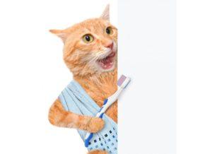 Pulizia denti gatto : Come prendere cura dei denti