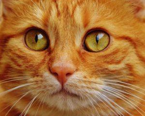 Come accarezzare un gatto? come coccolare un gatto?