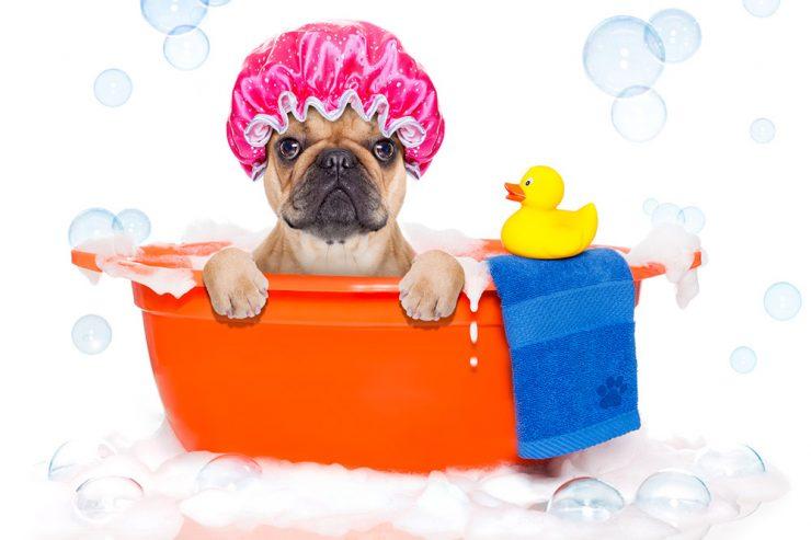 Colpo di calore cane : i cani che soffrono il caldo ?