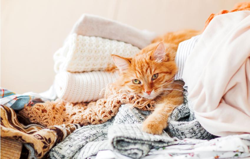 Come dorme il gatto : Il mio gatto dorme sui miei vestiti, cosa fare?