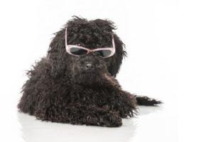Colpo di calore cane : Le razze di cani che non sopportano il caldo