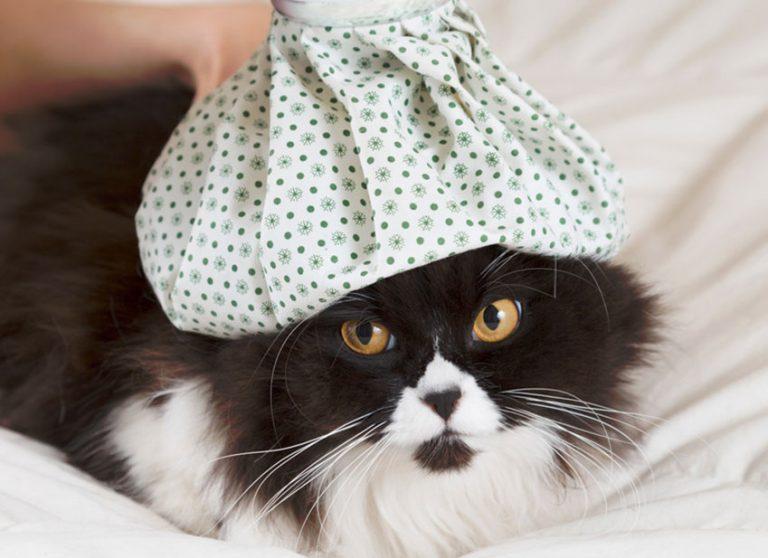 Malattia dei gatti : Quali sono le malattie più diffuse ?
