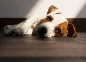 Cane disidratato, cane non beve