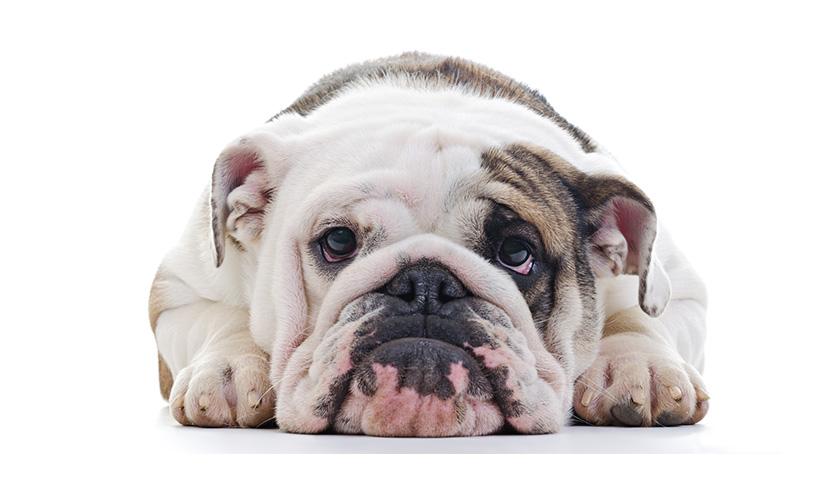 Il mio cane piange sempre, Cane piange senza motivo apparente
