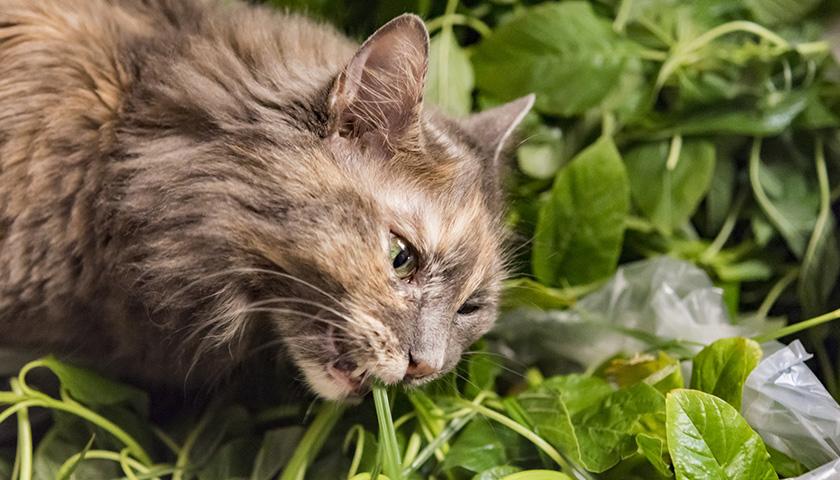 Gatto mangia piante : Il mio gatto mangia le piante, Cosa fare?
