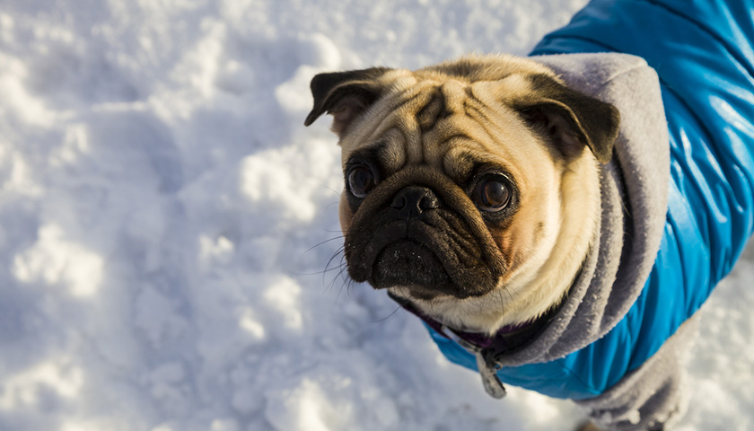 Cappotti x cani? Vestire i cani: Buona o cattiva idea?