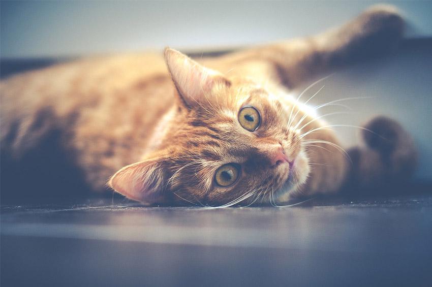 Gatto malato sintomi : come sapere se il gatto è malato?