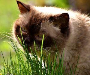 Starnuti gatto: Il mio gatto starnutisce,
