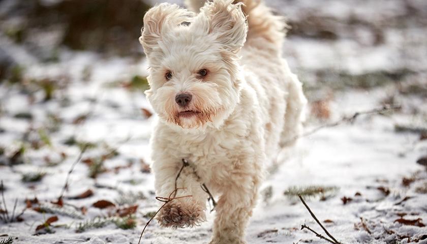 Ogni quanto portare fuori il cane durante l'inverno?