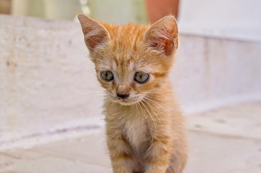 Depressione gatto: Sintomi gatto depresso