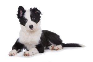 Formula super cane assuropoil