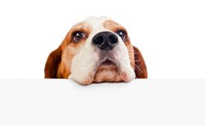 Perchè i cani si annusano il sedere?