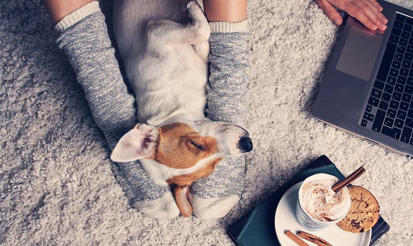 Covid : Quarantena con il cane