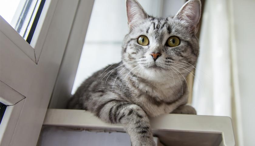 Gatto in appartamento 21 oggetti e alimenti da tenere fuori dalla portata del vostro animale