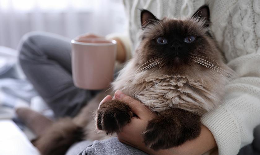Quarantena con il gatto: Quali precauzioni prendere per il proprio gatto durante la quarantena?