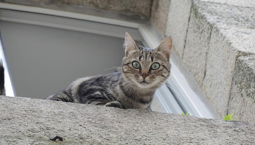Gatto paracadutista: Perché i gatti amano le altezze?