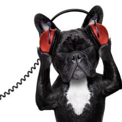 Musiche per cani