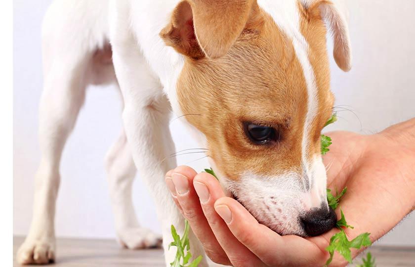 https://www.assuropoil.it/wp-content/uploads/alimentazione-naturale-cane-verdure-per-cani.jpg