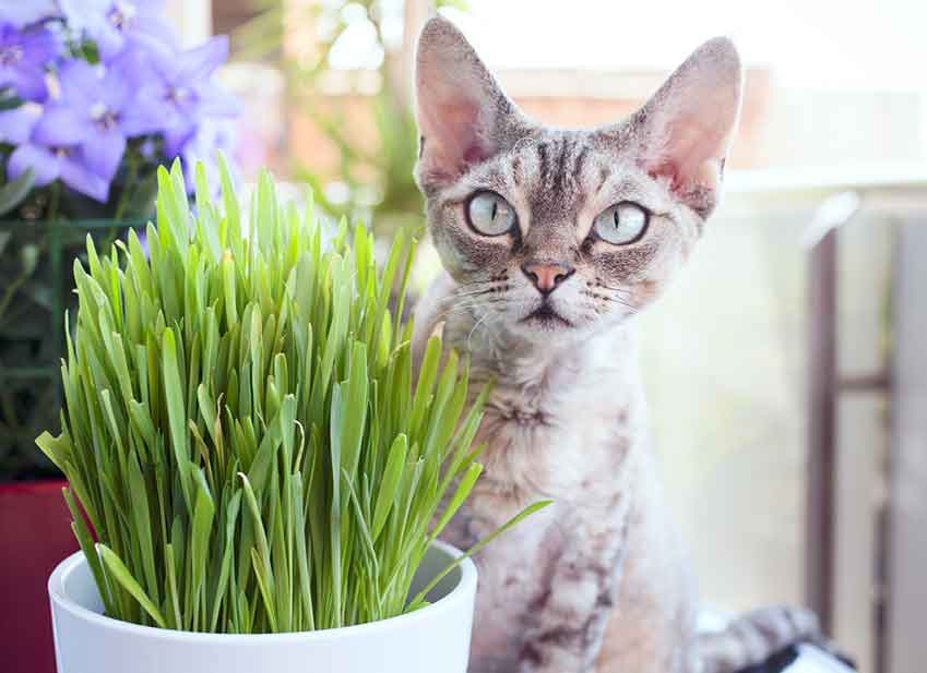 https://www.assuropoil.it/wp-content/uploads/alimentazione-naturale-gatto-erba-gatta.jpg