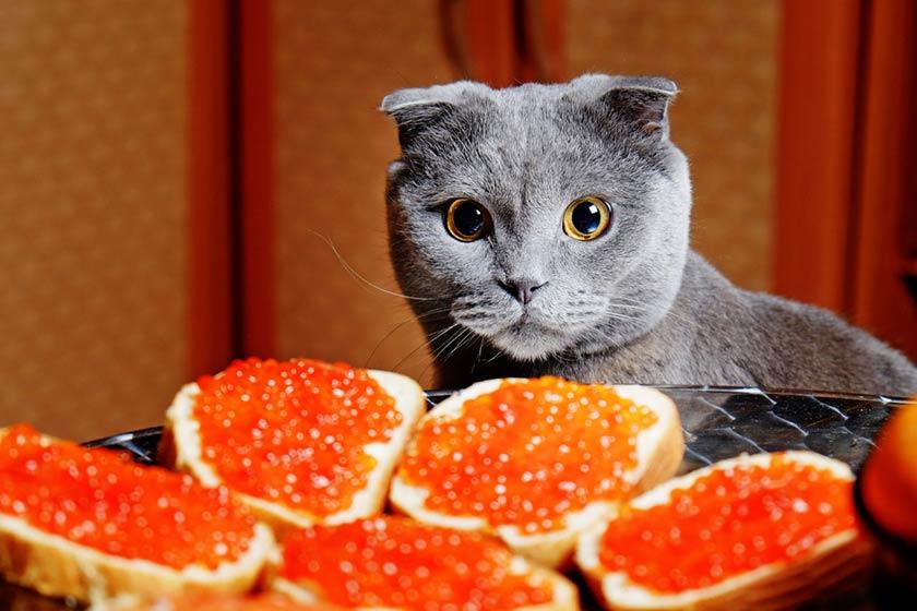 https://www.assuropoil.it/wp-content/uploads/alimenti-tossici-gatto-cosa-possono-mangiare-i-gatti-1280x853.jpg