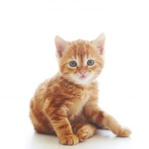 Aloe vera gatto