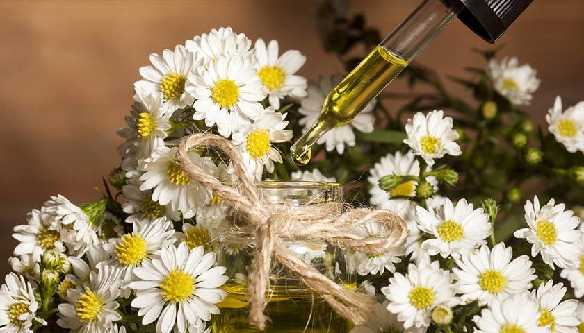 https://www.assuropoil.it/wp-content/uploads/aromaterapia-per-cani.jpg