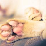 Assicurazione animali domestici, cos'è ?