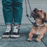 Assicurazione cane obbligatoria o no?