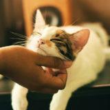 Assicurazione gatto costo : quanto costa assicurare il gatto?