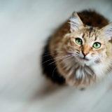 Assicurazione gatto obbligatoria : Perché assicurare il proprio animale da compagnia?