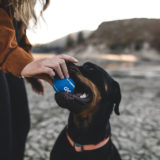 Assicurazione RC cane: Cos'è la responsabilità civile per il cane?