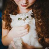 Assicurazione sanitaria gatto: Perché è importante assicurare il proprio gatto?
