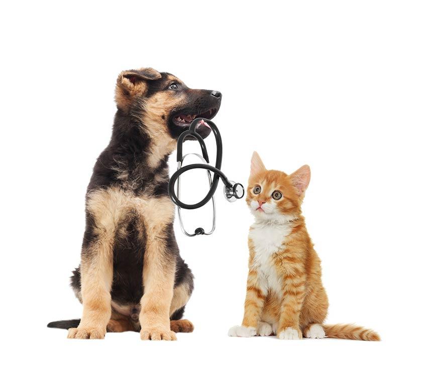 Assicurazione veterinaria cane gatto preventivo gratuito