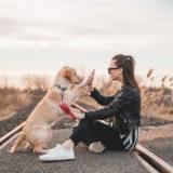Assicurazioni cane a confronto: come scegliere l'assicurazione giusta?