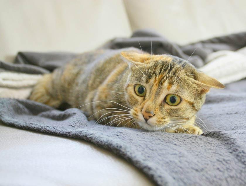https://www.assuropoil.it/wp-content/uploads/atteggiamenti-dei-gatti-gatto-timido-freddo-1280x967.jpg