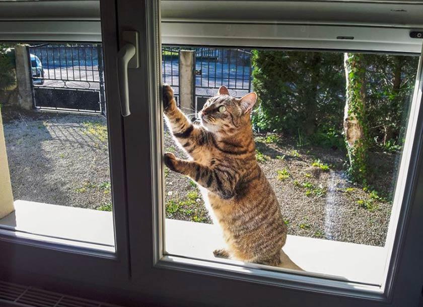 Atteggiamenti dei gatti : Rischi quando esce il mio gatto