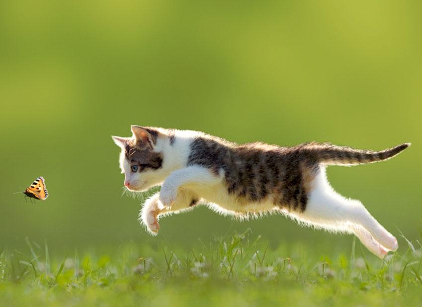 https://www.assuropoil.it/wp-content/uploads/atteggiamenti-dei-gatti-rischi-quando-esce-gatto.jpg