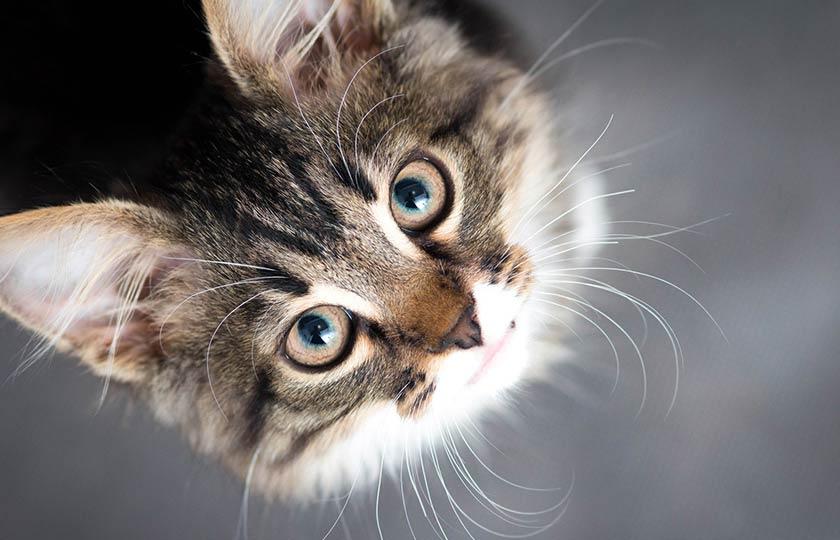 https://www.assuropoil.it/wp-content/uploads/avere-un-gatto-benefici.jpg