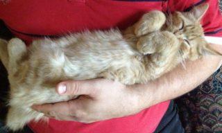 Benefici di avere un gatto in casa